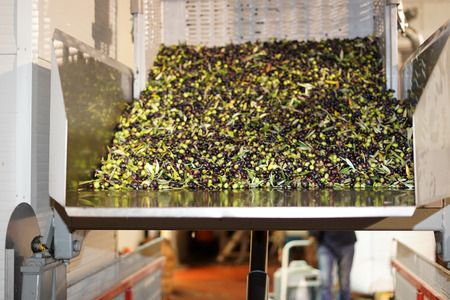 virgin olives oil mill factory in Italy Imagens