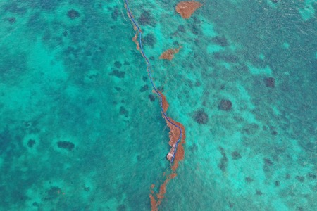 caribbean sea covered by sargasso algae seaweed in Tulum Mexico