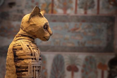 Alte ägyptische Mumie Katze Nahaufnahme Detail