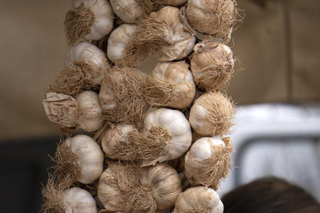 fresh garlic heads close up detail at the market