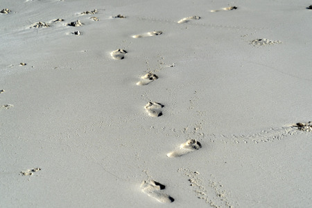 Spiaggia tropicale con tracce di piedi umani sulla sabbia
