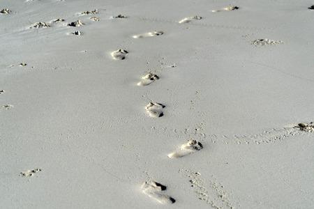 Tropikalna plaża ze śladami ludzkiej stopy na piasku