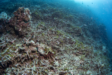 Reef Dead coral bleaching  while diving indonesia Imagens