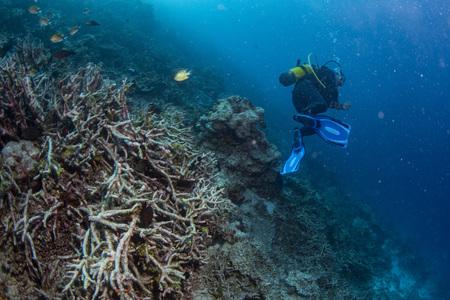 Reef Dead coral blanqueamiento mientras bucea indonesia Foto de archivo