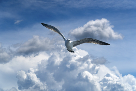 seagull while flying on cloudy sky