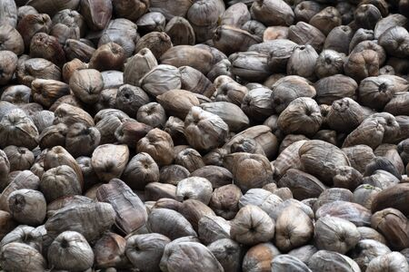 Many dried coconuts in seychelles