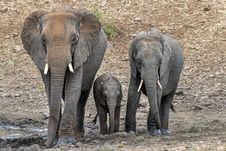 family with baby elephant in kruger park south africa portrait