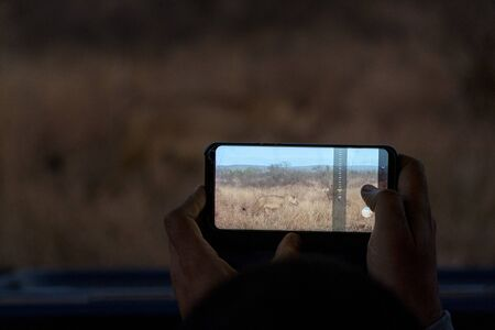 safari photographer taking picture of lion with smartphone at night in kruger park south africa