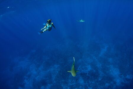 diving with black tip and lemon shark underwater in french polynesia