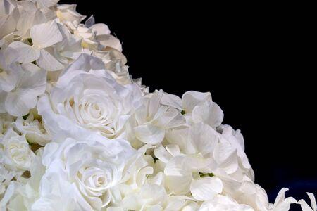 white roses on black background