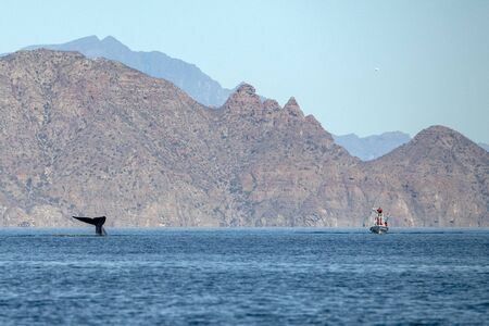 blue whale watching in baja california Mexico