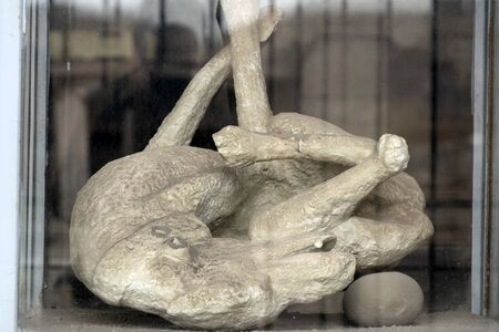 pompei ancient ruins buried corpse dog body statue detail