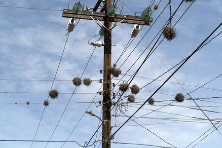 Tillandsia recurvata aerial Plant growing on power lines in Baja California Sur Mexico