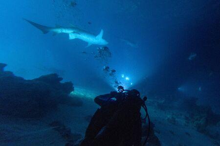 diving with nurse shark at night on alimatha maldives site
