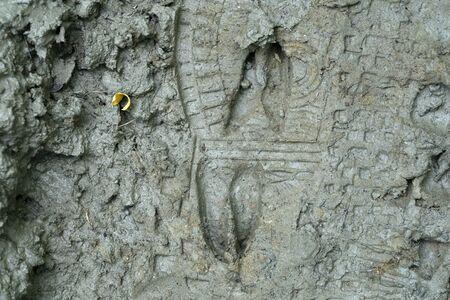 roe deer and human print on mud detail
