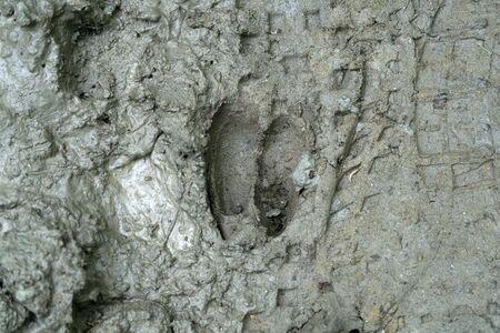 roe deer print on mud detail