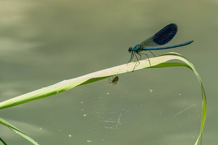 blue dragonfly on a green branch background Stockfoto - 150457077