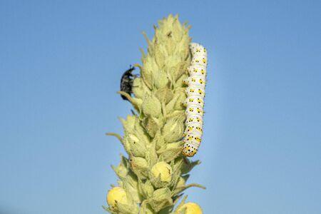 white and yellow worm grub caterpillar