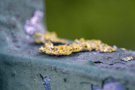 Green moss macro close up detail Stockfoto