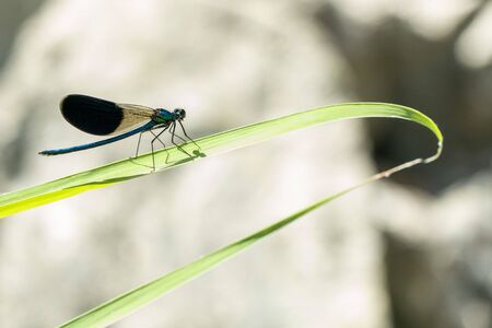 blue dragonfly on a green branch background