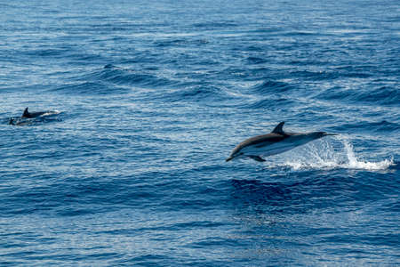 Move effect on striped dolphin jumping outside the sea Stockfoto - 150617106