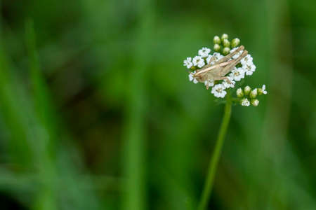 Cricket on a flower macro close up portrait