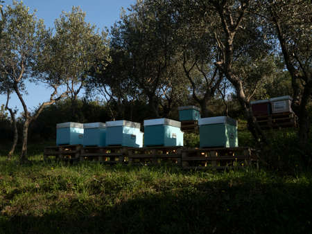 beehives in a field and olive trees Standard-Bild