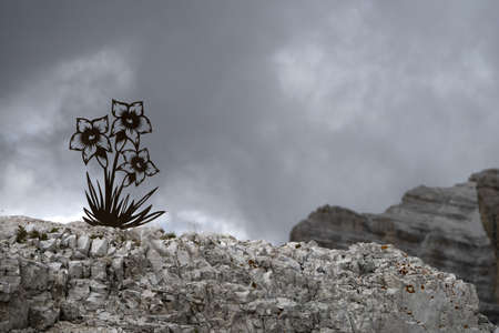 flowers silhouette edelweiss alpine star tofane dolomites mountains panorama landscape