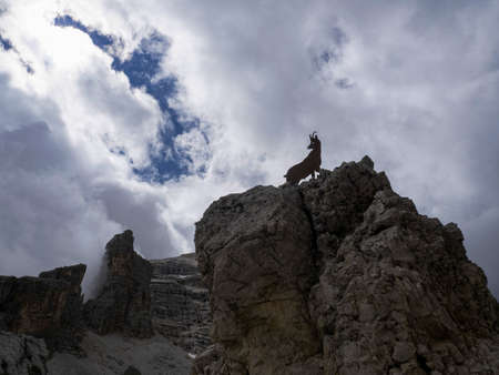 steinbock silhouette in tofane dolomites mountains panorama landscape Stockfoto