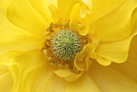 Center of yellow flower