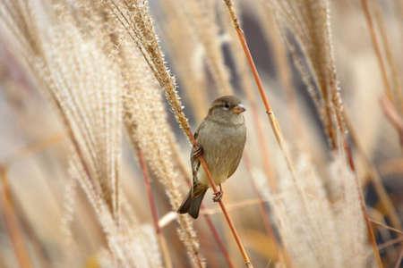 Sparrow on the grass. Late autumn. Gaithersburg, Maryland USA Stock Photo