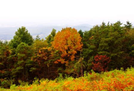 Autumn in mountains  Shenandoah National Park. Virginia photo