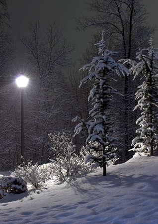 The fir and street lamp photo