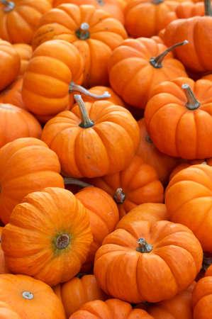 Pumpkins Stock Photo - 252898