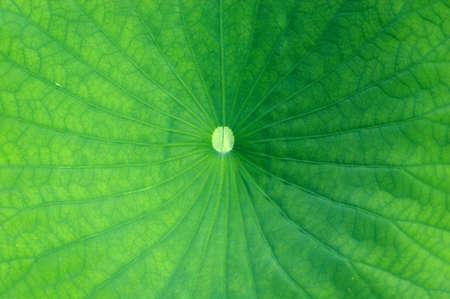 asymmetry: Green leaf
