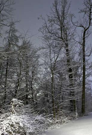 Winter landscape Banco de Imagens