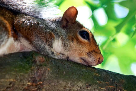 Thoughtful squirrel photo