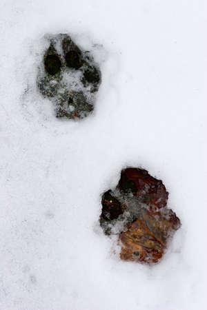 Hund Spuren auf einer Schnee Standard-Bild - 300277
