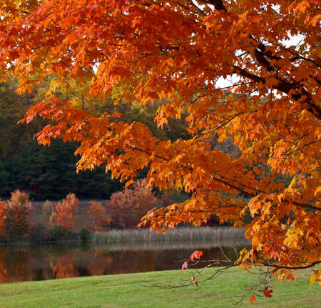 Autumn foliage Stock Photo - 479102