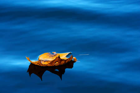 Yellow maple leaf on blue water photo