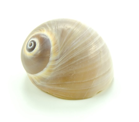 close up of small shell photo