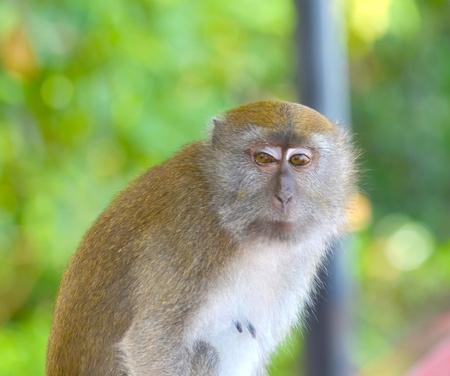 Monkey poses  photo