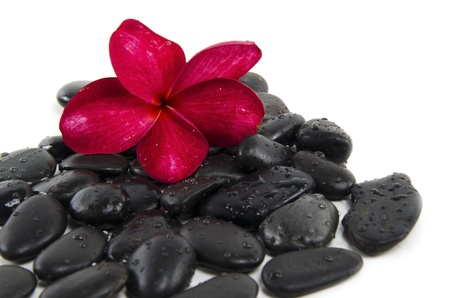 Spa concept with zen stones and fragipani flower  photo