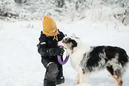 Little boy playing with australian shepherd with puller in winter forest.