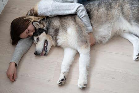 Caucasian woman embracing alaskan Malamute dog with love. Indoor. 版權商用圖片