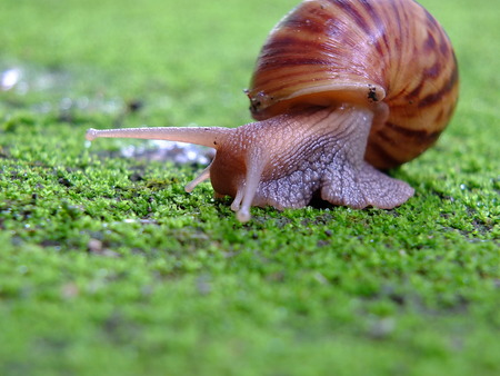 Snail animal's life crawling on green grass eat some food