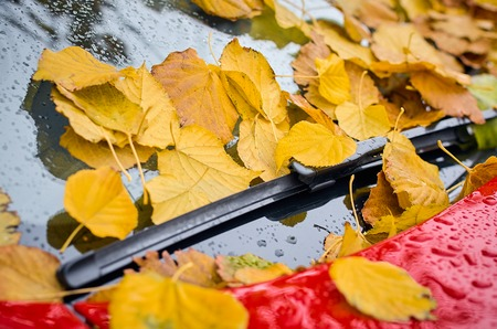 season and transport concept - close up of car wiper with autumn maple yellow leaves on windshield on a red car. Stock Photo