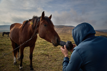 Tourist tourist in a blue sweatshirt with a camera photographs a curious horse. travel concept, photographer at work, autumn time