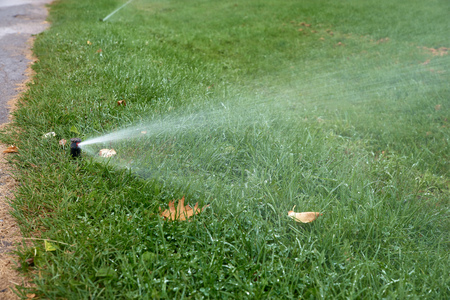 automatic sprinkler system watering the lawn on a background of green grass, close-up.