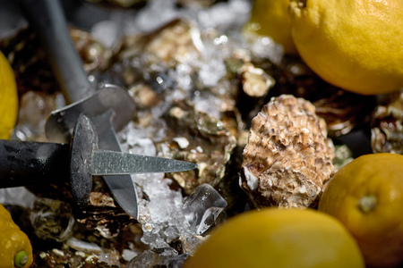 Oysters on the ice and lemon.Oyster Shells and knife. Oysters background, close up.